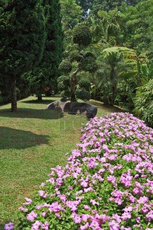 Photo pour Le plus beau parc d'Asie du Sud-Est. Un chef-d'œuvre de l'architecture paysagère un immense parc en Thaïlande. Superbes parterres de fleurs, pelouses et arbres tropicaux - image libre de droit
