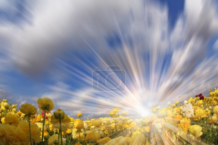 """The sparkling sun. The photo is made by a lens """"Fish eye"""""""