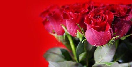 Photo pour Belles roses rouges sur fond rouge - image libre de droit