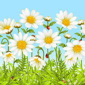 Vector seamless horizontal background with camomile