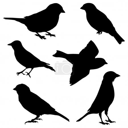 Set of vector images sparrow...