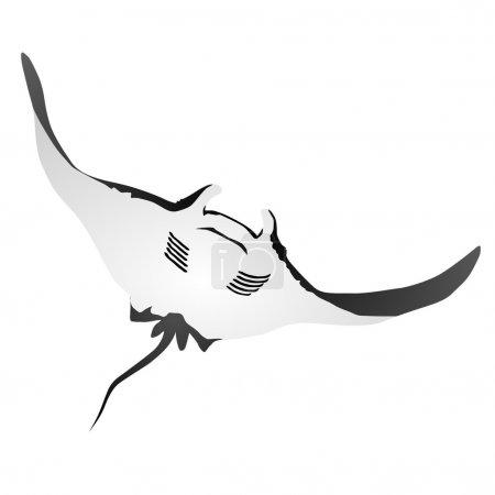 Illustration pour Manta Atlantique - image libre de droit