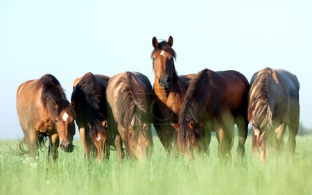 Young horses eating grass in field