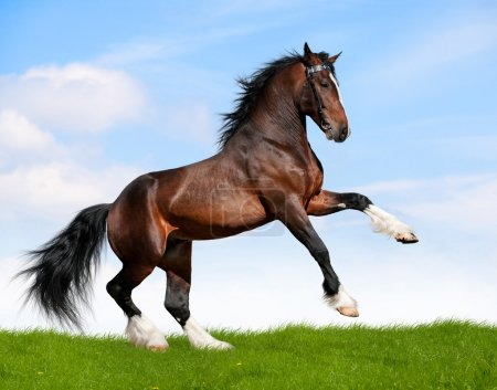 Black horse galloping in field....