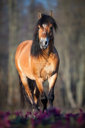 Photo pour Course de chevaux dans la forêt printanière - image libre de droit