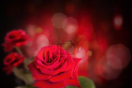 Photo pour Rose en fond sombre - image libre de droit