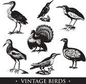Vintage birds illustrations Vector set