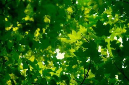 Photo for Fresh green leaves forming natural background - Royalty Free Image