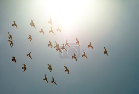 Photo for Birds flying against direct sunlight - Royalty Free Image