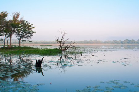 Mystical lake in tropical climate