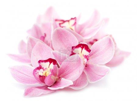 Photo pour Fleurs d'orchidée roses isolés - image libre de droit