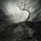 Dramatic sky over old lonely tree.