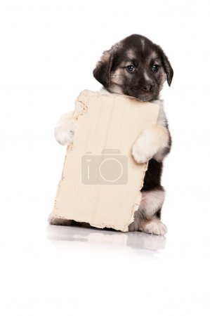 Cute puppy of 1,5 months old with a cardboard on a...