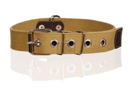 Photo pour Nouveau collier de chien isolé sur fond blanc - image libre de droit