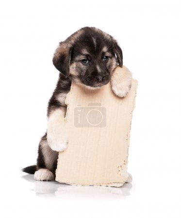 Puppy with paper