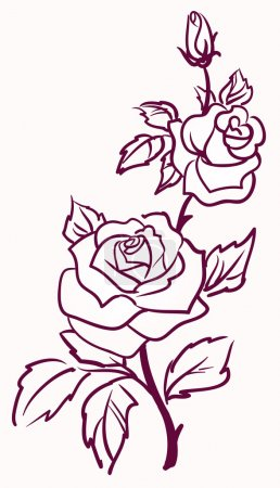 Illustration for Three stylized pale roses isolated on light background, vector illustration - Royalty Free Image