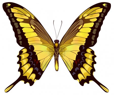 Isolated Yellow Butterfly VectorIllustration