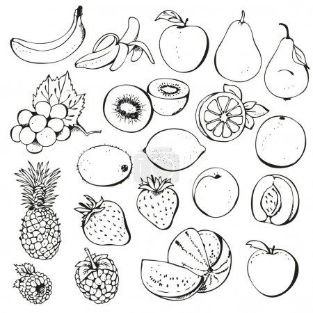 Illustration pour Fruits et petits fruits isolés sur un fond blanc - image libre de droit