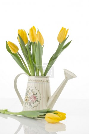 Photo for Beautiful spring cheerful tulips in watering can isolated over white background - Royalty Free Image