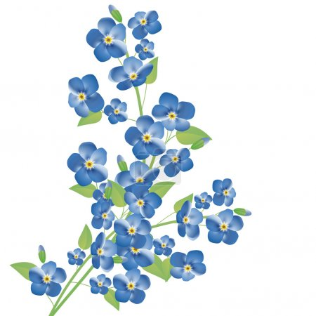 Illustration for Illustration of the forget-me-not flowers over white background - Royalty Free Image