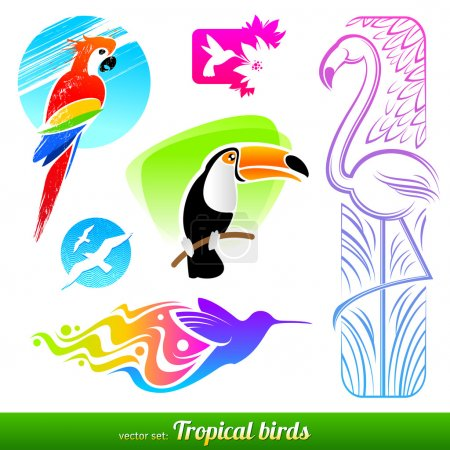 Vector set of stylized decorative tropical birds