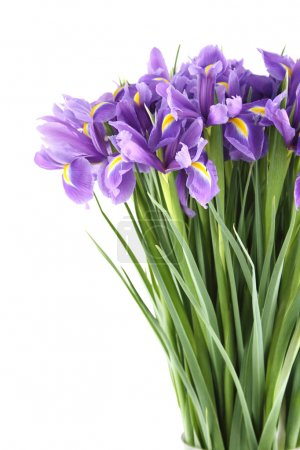 Photo for Close-up of a beautiful bouquet of purple irises. Isolated on white background - Royalty Free Image