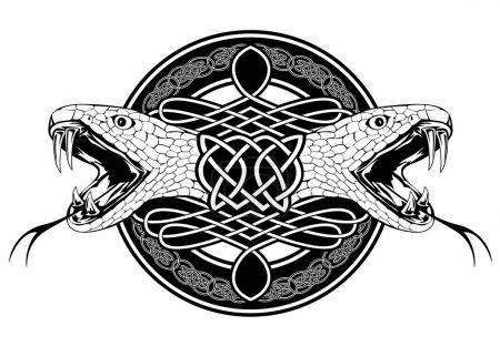 The vector image of head of snake and Celtic patte...