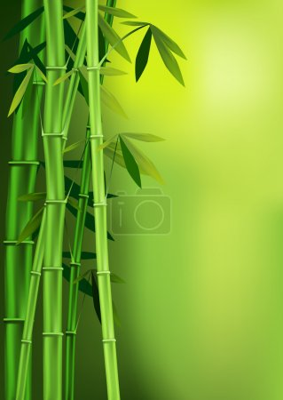 Illustration for Vector images of stalks of bamboo - Royalty Free Image