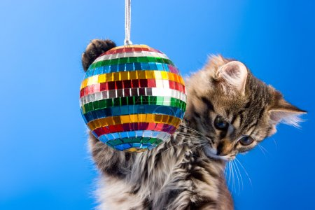 Cat playing with disco ball
