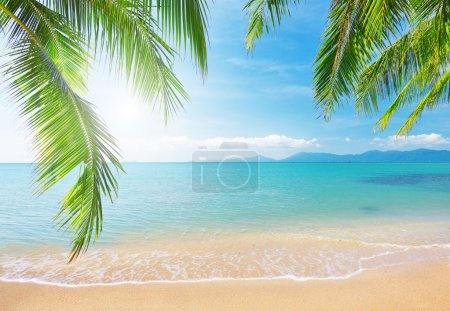 Photo for Beach with coconut palm and sea - Royalty Free Image