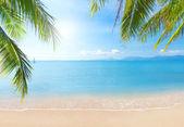 A kókusz Pálma és tengeri Beach