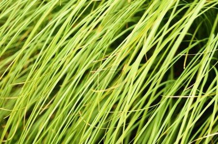 Foto de Fondo de naturaleza verde con hierba de hojas - Imagen libre de derechos