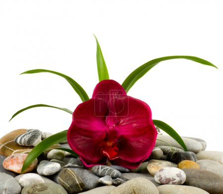 Stones and red orchid