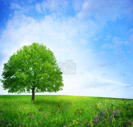 Photo pour Chêne sur le champ de la fleur - image libre de droit