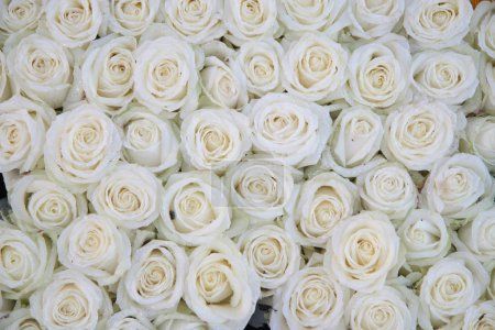 Group of white roses after a rainshower