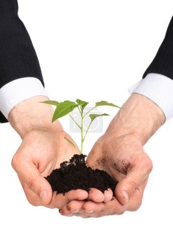 Business men a plant