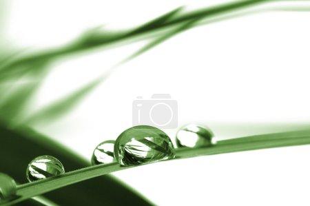 Photo pour Gouttes avec herbe verte - image libre de droit
