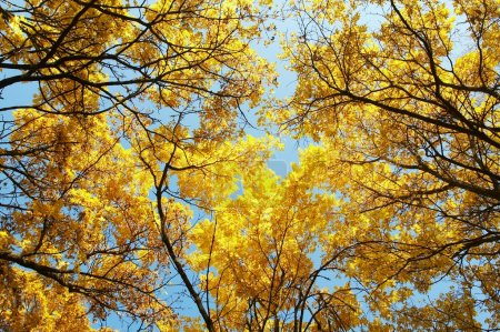 Photo for Autumn, fall background - Royalty Free Image