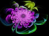 Fraktál. květ