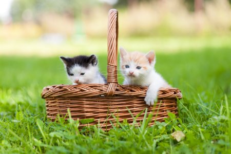 Two little cats in basket outdoors