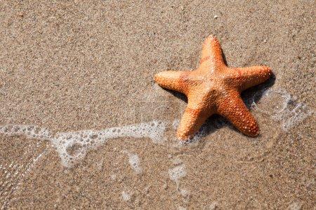 Starfish and wave on beach