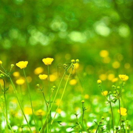 Campo de flores de primavera y día soleado perfecto