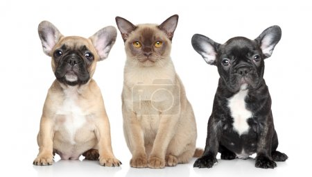 Cat and dog puppies on a white background