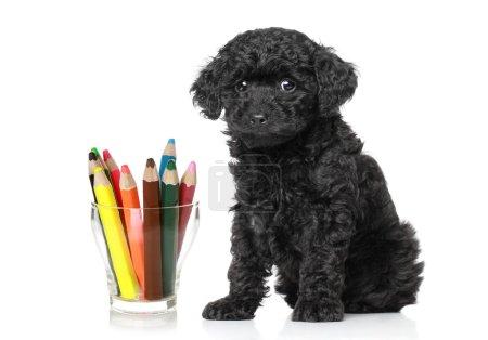 Photo pour Chiot caniche jouet noir assis près du verre avec des crayons de couleur - image libre de droit