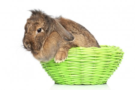 Lop-eared rabbit in basket on a white background