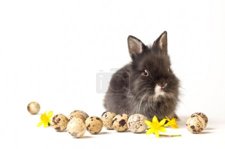 Photo for Easter rabbit isolated on white background with eggs and flowers - Royalty Free Image