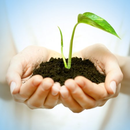 Photo for Human hands holding green small plant new life concept. - Royalty Free Image