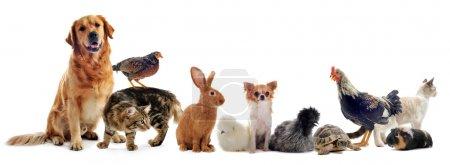 Photo pour Groupe d'animaux de compagnie devant un fond blanc - image libre de droit