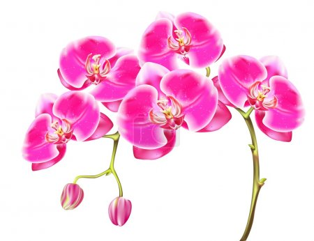 Illustration for Drawing sprigs of pink orchids - Royalty Free Image