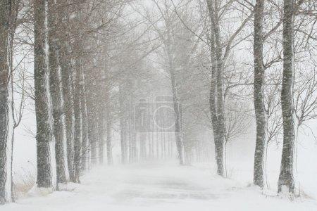 Photo pour Route de campagne pendant une tempête de neige. - image libre de droit